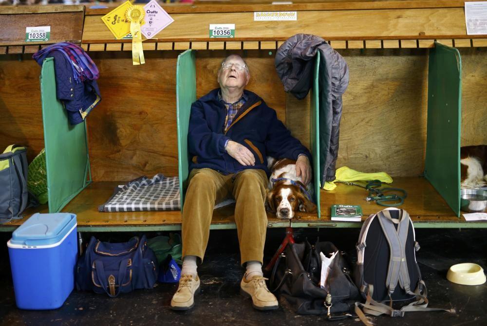 Les imatges més divertides del Crufts Dog Show