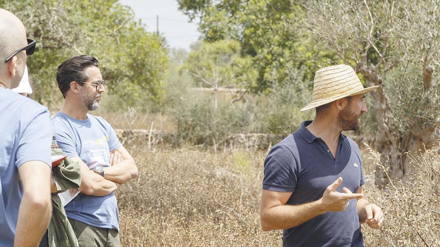 Finca Sa Quenti, reforestación y biodiversidad en Mallorca