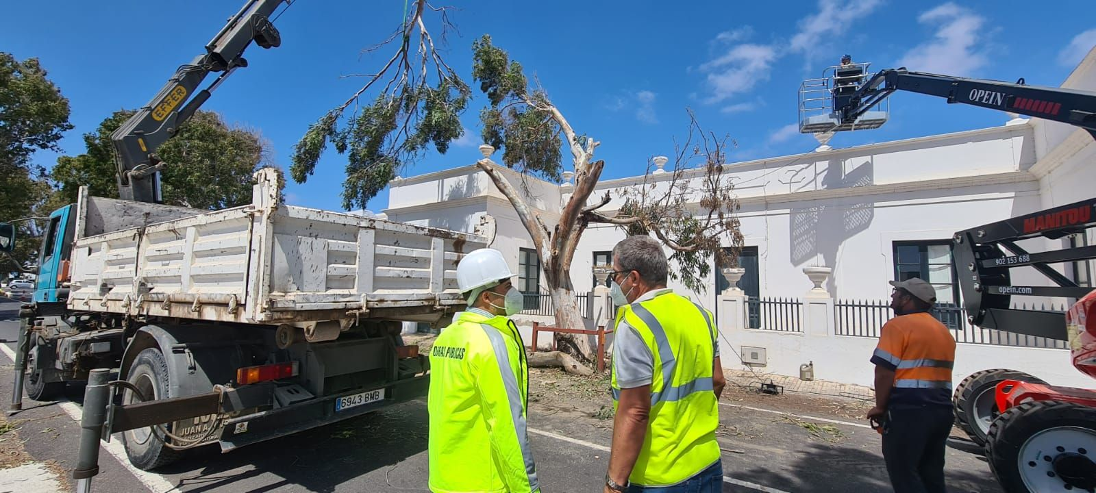 Traslado de un árbol en Guatiza