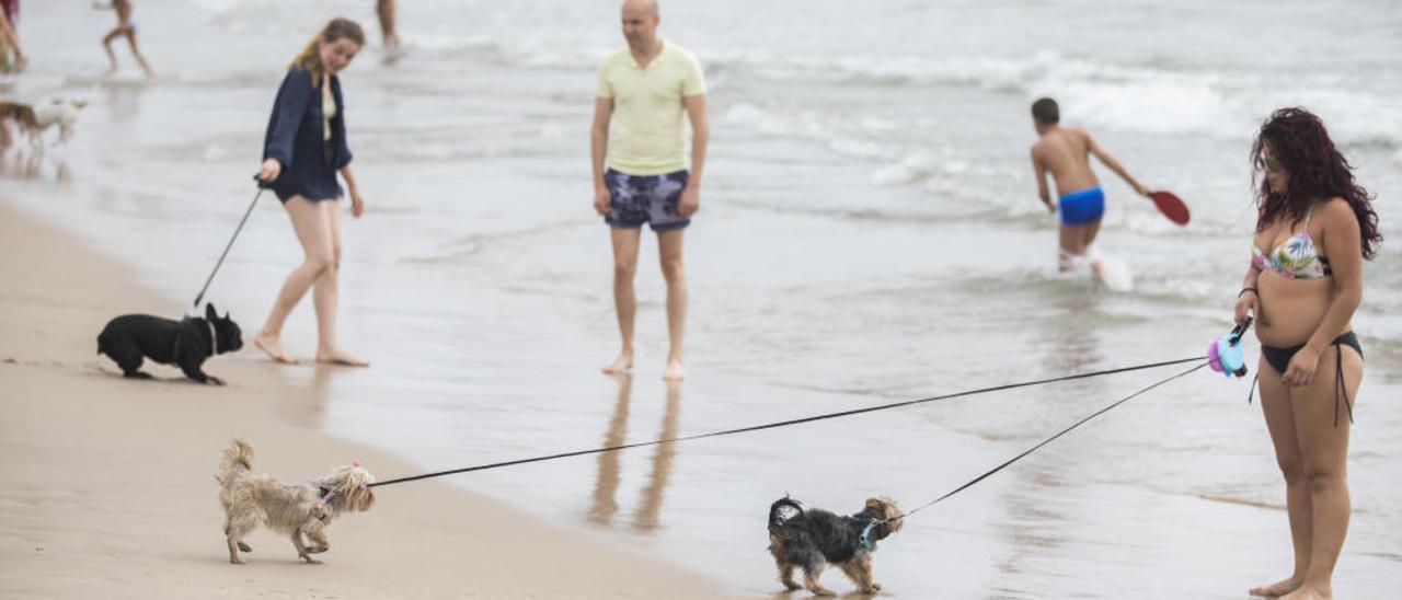 Playa de perros de Pinedo.