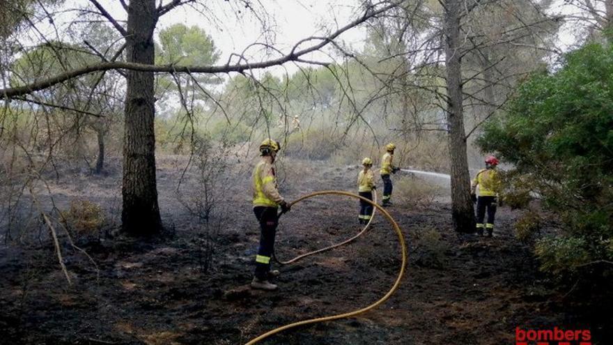 Un incendi crema 3000m2 de matolls i sotabosc a Sant Esteve