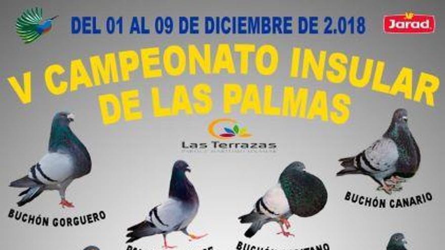 Las Terrazas alberga el V campeonato insular de Las Palmas de palomos buchones