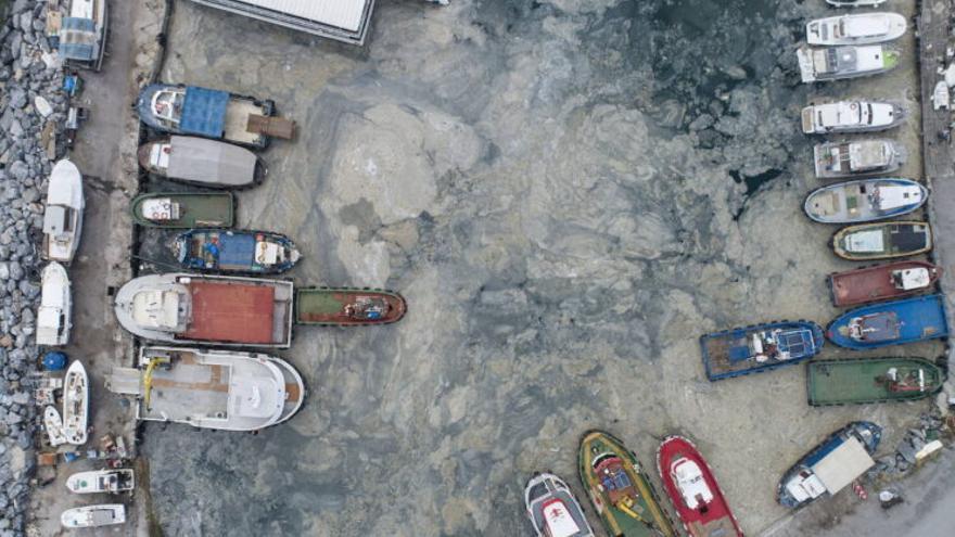 ¿Qué es el temible 'moco marino' que se propaga por el Mediterráneo?