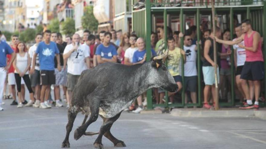 Más del 86 % de los vecinos de Simat decide mantener los «bous al carrer»