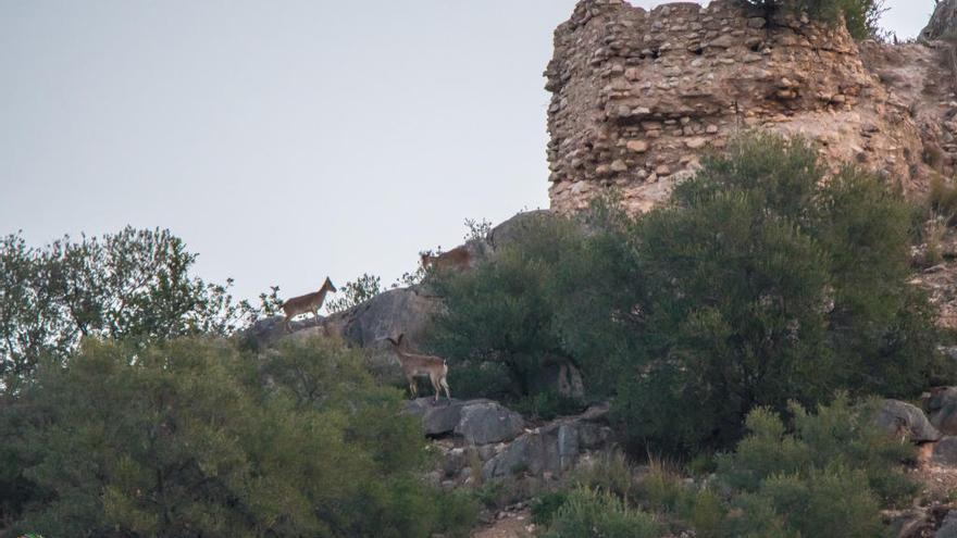 El Castellet podrá restaurarse una vez conseguida ya la titularidad pública