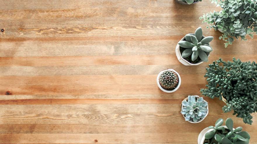 Las 5 plantas de interior que necesitan poca luz
