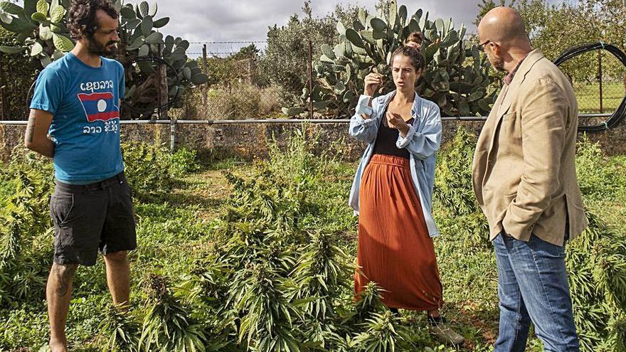 El cultivo de cáñamo, una alternativa agroalimentaria