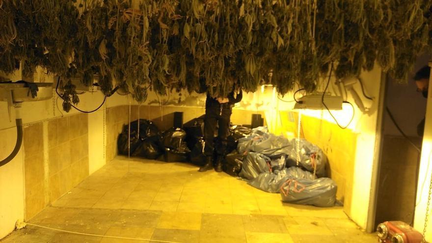 Desmantelan un secadero de marihuana en un antiguo cuartelillo de Elda