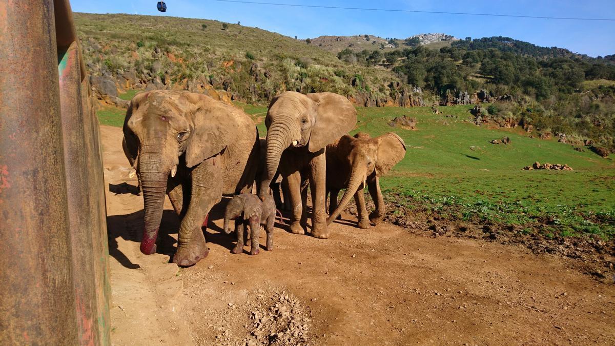 Los elefantes del Parque de la Naturaleza de Cabárceno.