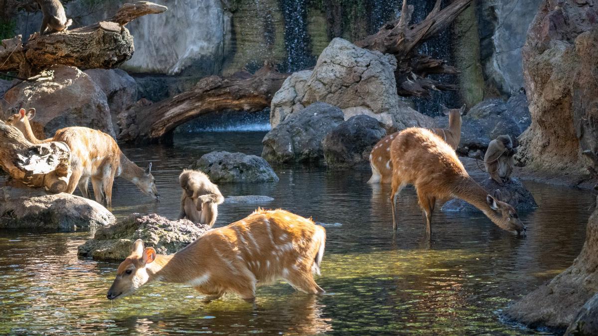 Bioparc acerca los tesoros de la selva africana al interior de València.