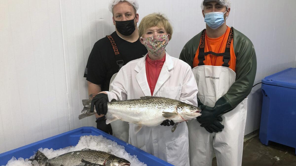 El salmón genéticamente modificado ya se vende en EEUU