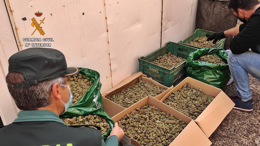 Desarticulada en Argujillo la plantación de marihuana más extensa de la provincia