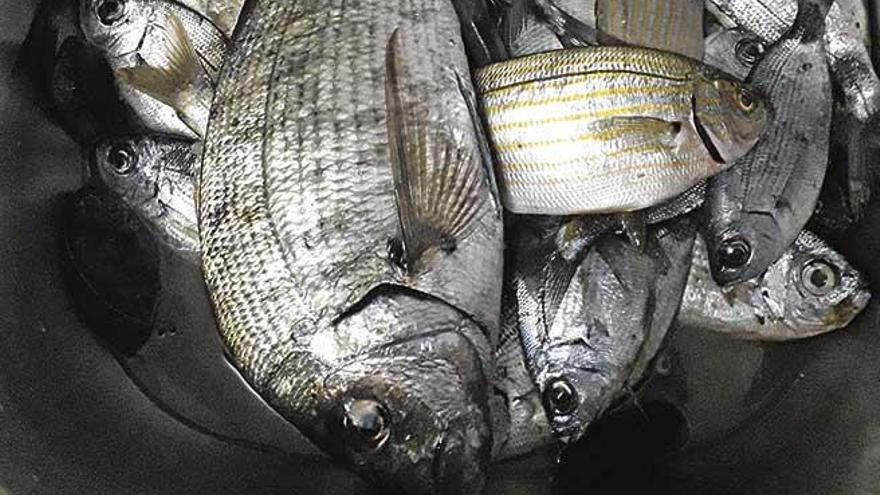 El negocio de la pesca sostenible