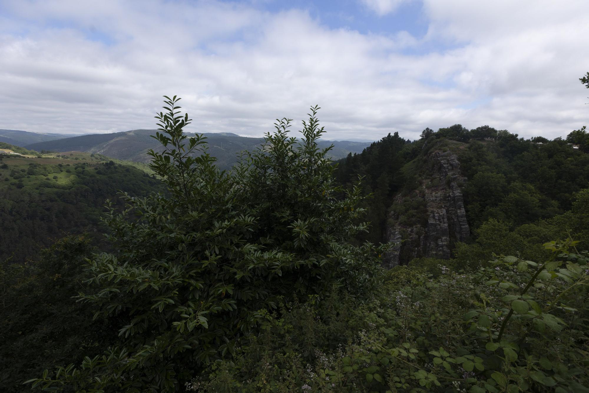 paisajes desde el castro Chao.jpg
