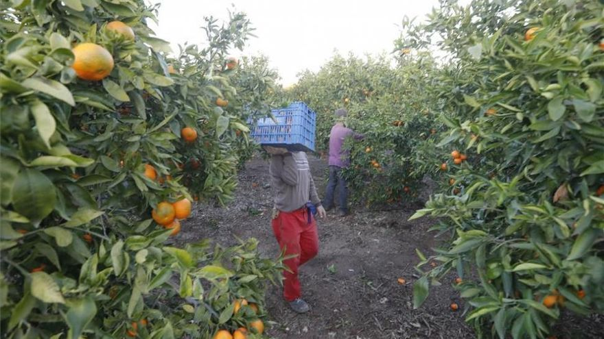 ¿Cuál es el precio de las fincas agrarias y por cuáles se paga más en Córdoba?
