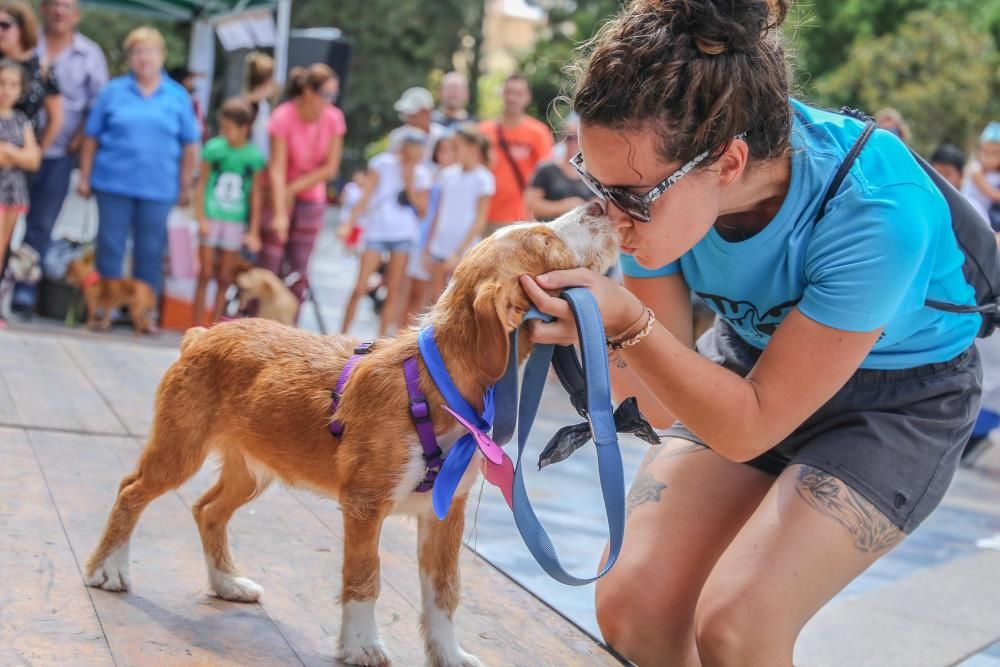 Jornada contra el maltrato animal en Orihuela
