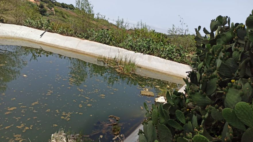 Así fue el rescate de tres perros de un estanque de Gran Canaria