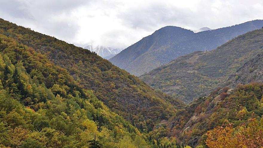 Els boscos del Pirineu, en perill
