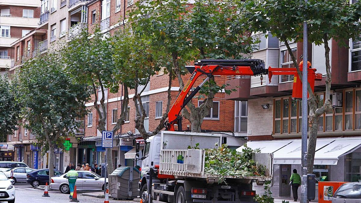 Poda de árboles en la avenida de Tres Cruces.