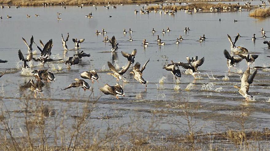 Paseos ornitológicos por Villafáfila  con motivo del Día de las Aves
