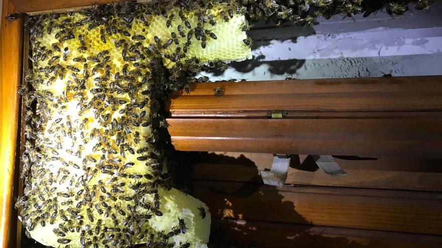 Los bomberos retiran un enjambre de abejas de una casa de Dénia