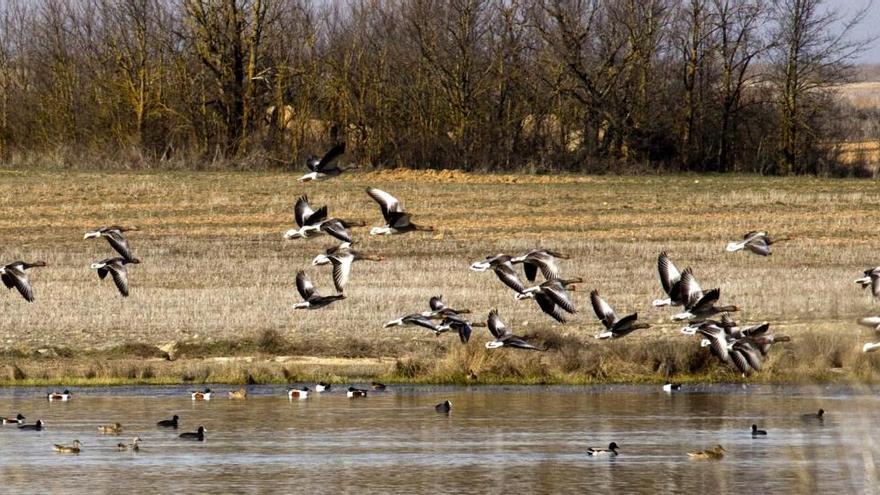 ¿Por qué algunas aves viven deprisa y mueren jóvenes?