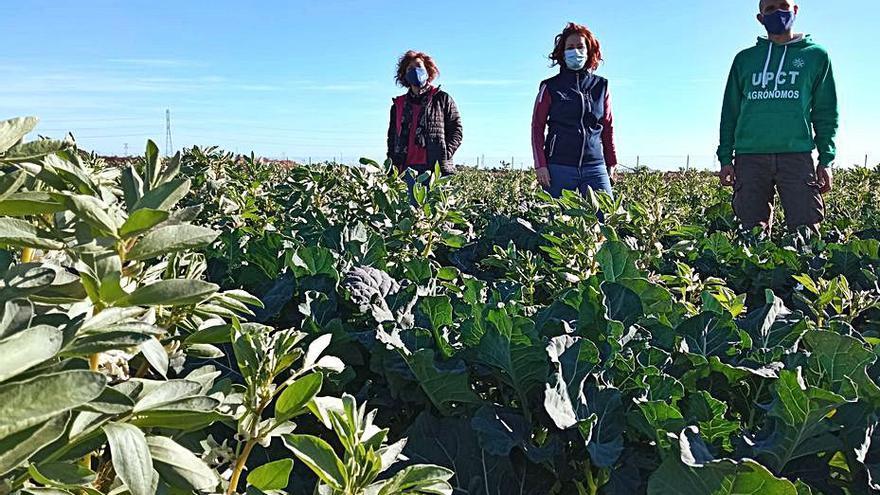 Mejoran la rentabilidad de los cultivos hortícolas asociándolos a leguminosas