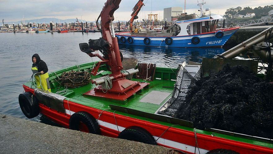 """El seguro contra la """"marea roja"""" reserva cuatro millones de euros a la ría de Arousa"""