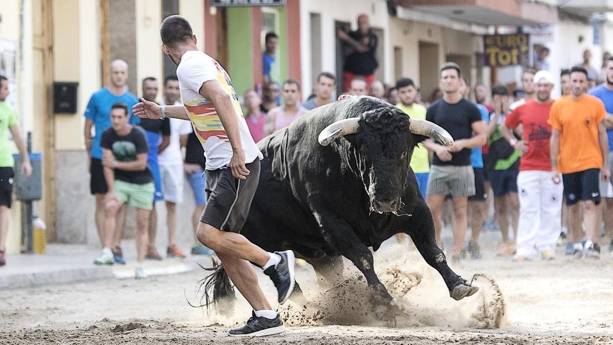 La Diputación ayuda con 170.000 euros a los ganaderos de toros bravos