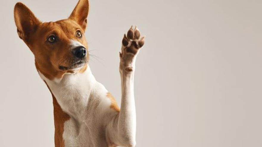 """Una entitat animalista demana una regulació """"més estricta"""" dels petards per no fer patir els animals"""