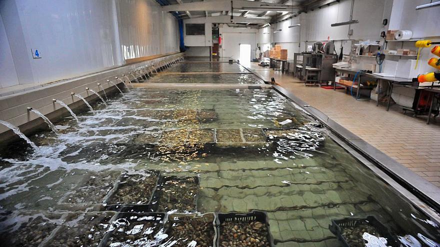 Crece la fuga de empresas gallegas por la Ley de Cambio Climático