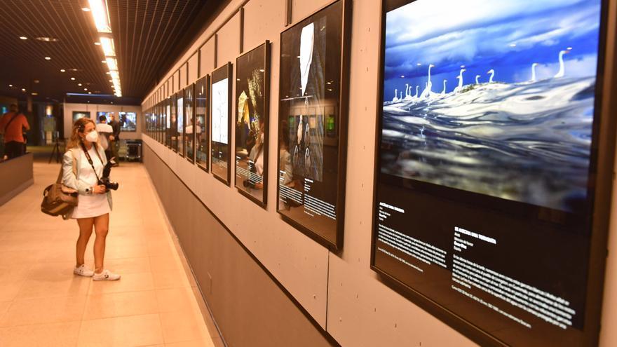 El Aquarium exhibe las mejores fotos de naturaleza, elegidas de entre 19.000