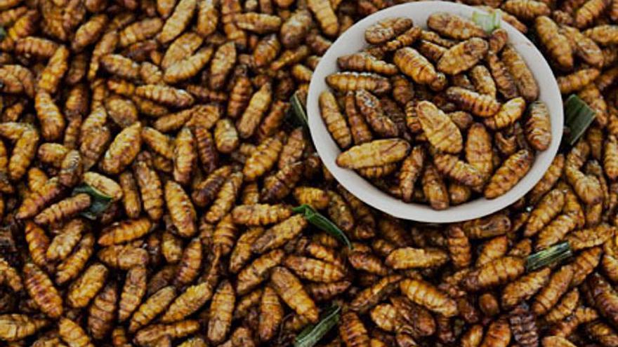 La UMU crea una empresa centrada en la cría de insectos