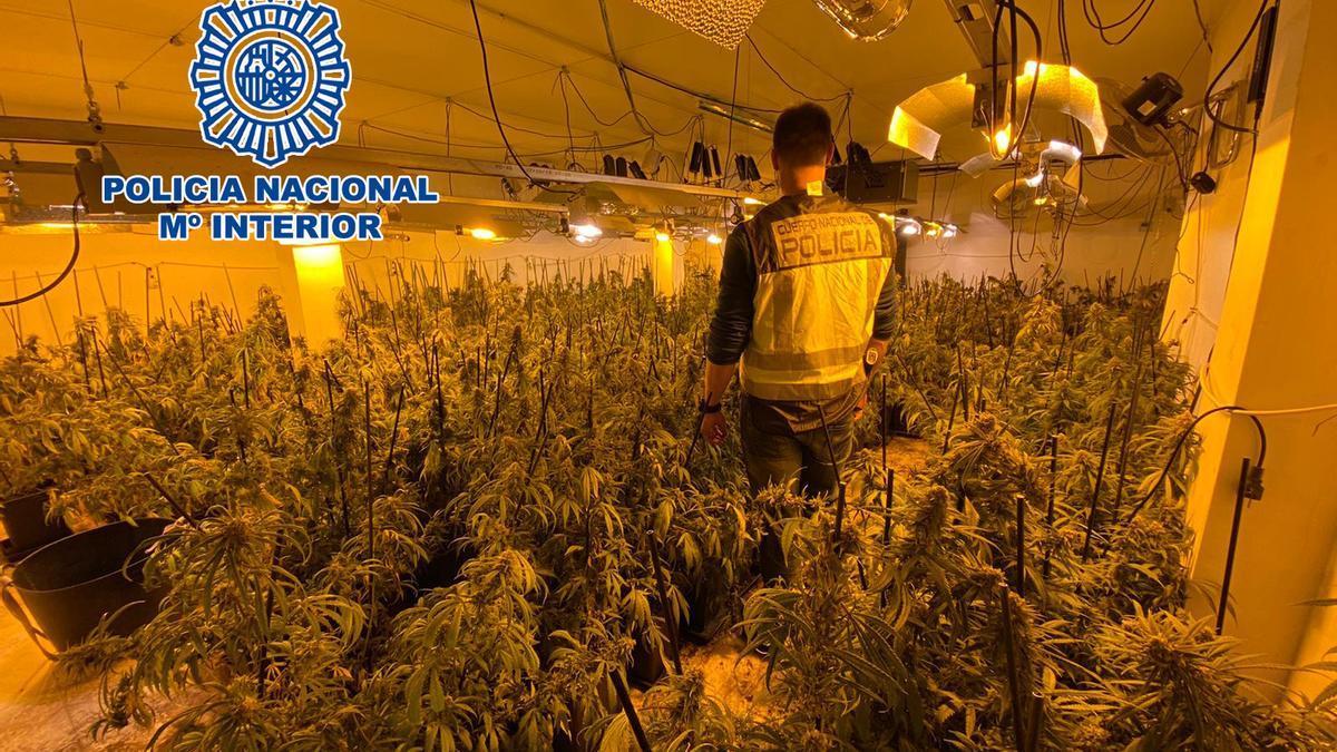 La Policía Nacional desmantela dos plantaciones de marihuana en la Nucia y Altea la Vella.