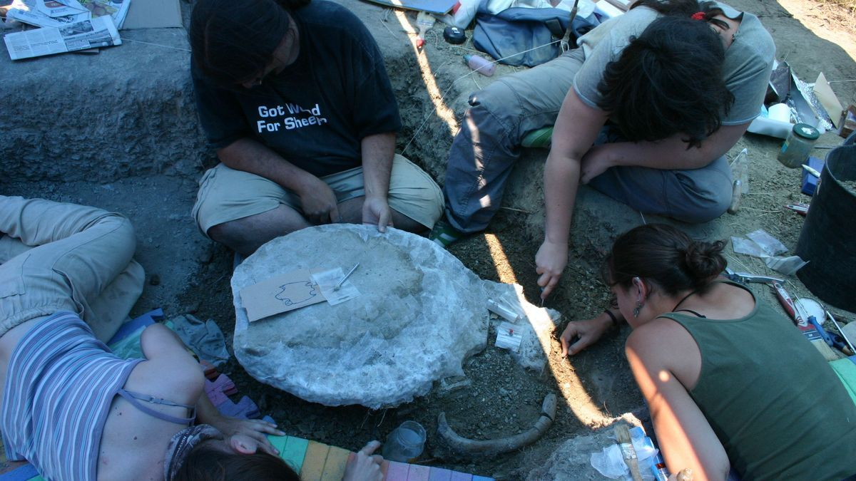 Excavación y extracción en el yacimiento.