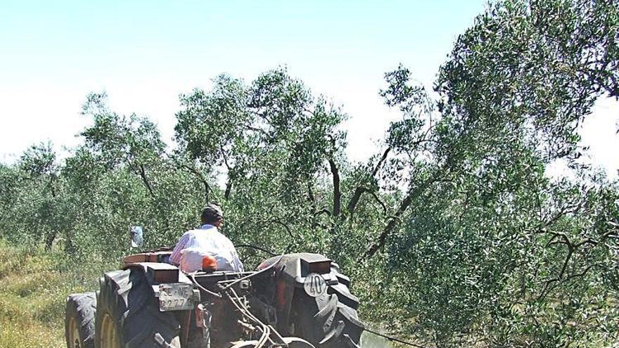 Más de 95.400 cabezas de ganadería ecológica
