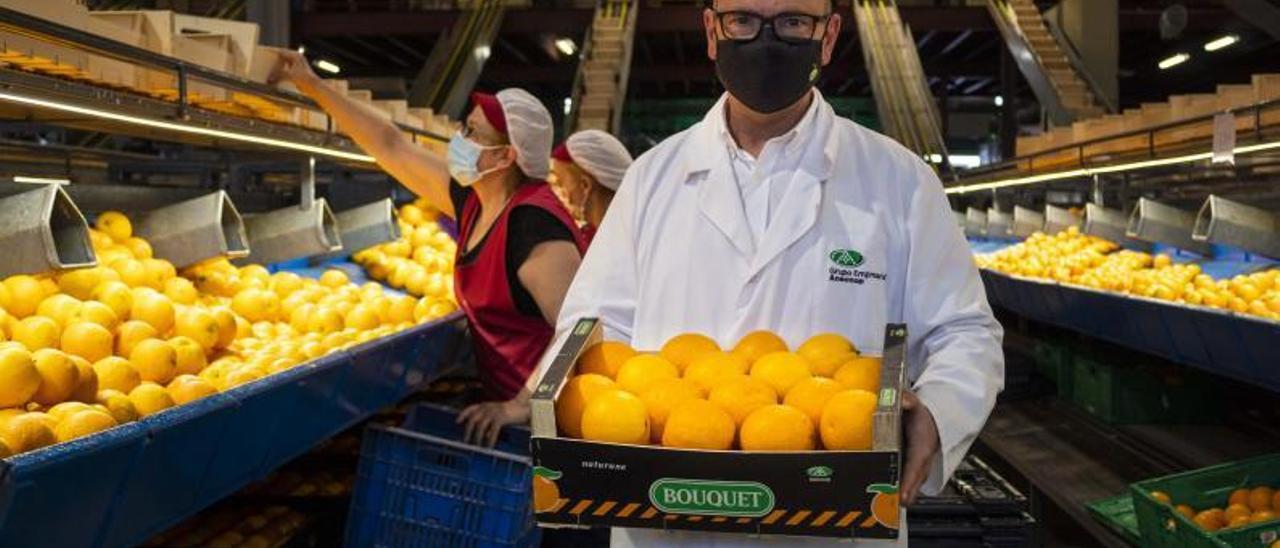 El gerente de la cooperativa Green Fruits, Jaime Torres, sostiene una caja de naranjas como las que viajaron hace un mes a Perú.   DANI MONLLOR