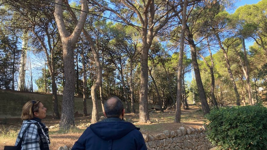 Figueres engega un projecte per reubicar els estornells a la pineda de la pujada del Castell