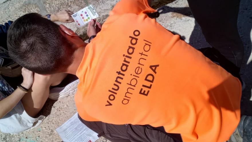 Actuaciones del voluntariado ambiental de Elda para la campaña de primavera