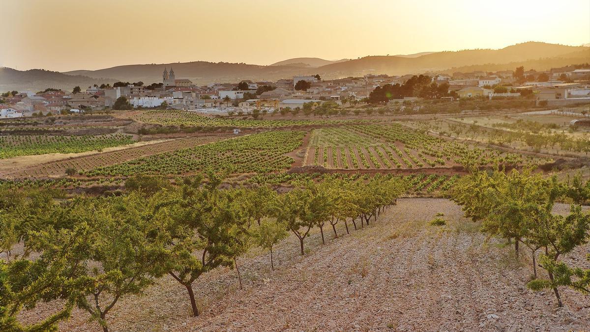 Uno de los múltiples viñedos que se asientan en la provincia de Alicante