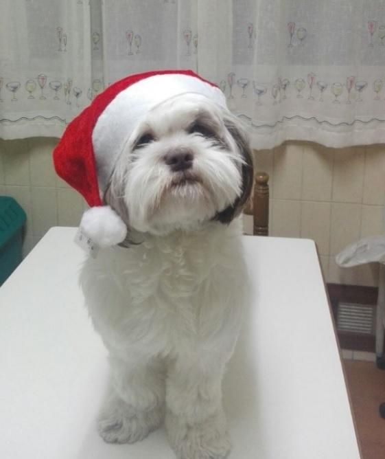 Mascotas navideñas de los lectores