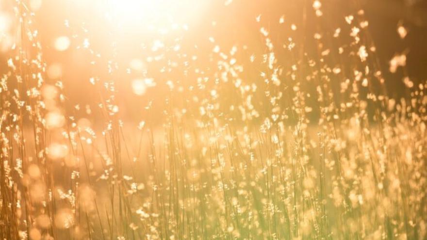 Es posible cultivar alimentos con aire y energía solar