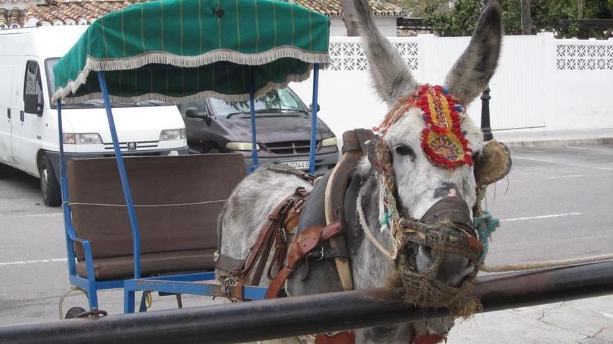 Los burro-taxis tendrán un estatuto de los trabajadores