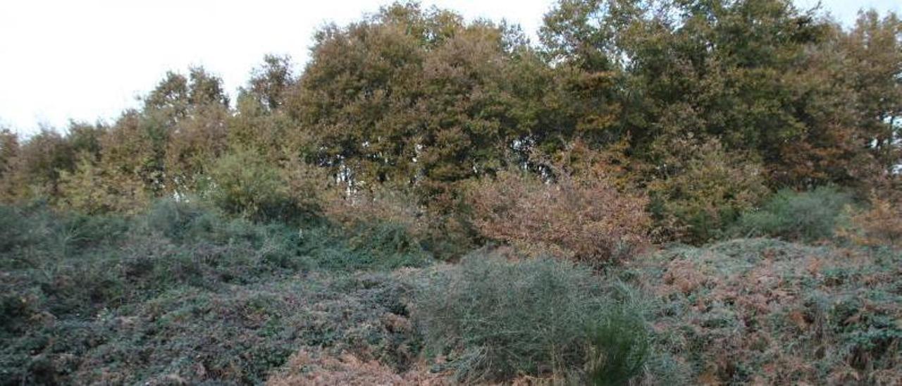 Finca llena de matorrales sin cuidar en la comarca del Deza. |   // BERNABÉ/GUTIER