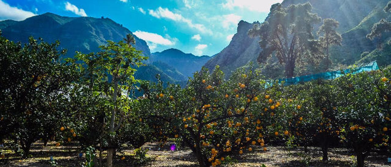 El Valle aspira a convertirse en la huerta de la fruta exótica y las hierbas