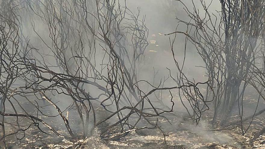 Sofocado un incendio forestal entre Losacio y Ferreruela de Tábara
