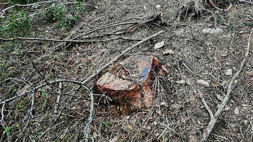 Meandre celebra un acord per garantir la restauració del bosc talat a Rajadell
