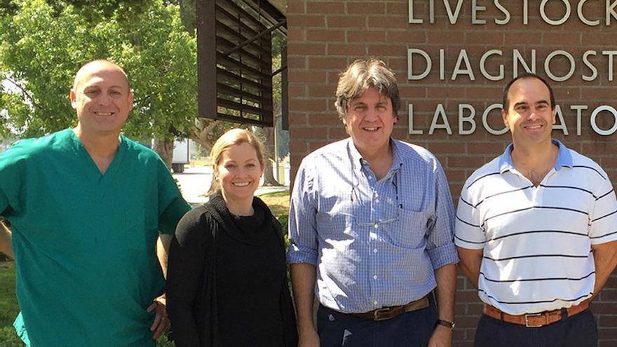 Hallan una nueva ruta de infección de una bacteria que se contagia de caballos a humanos