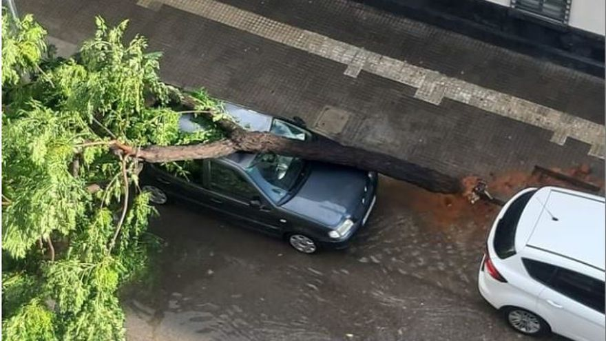 Una tromba de agua derriba árboles e inunda calles en l'Horta