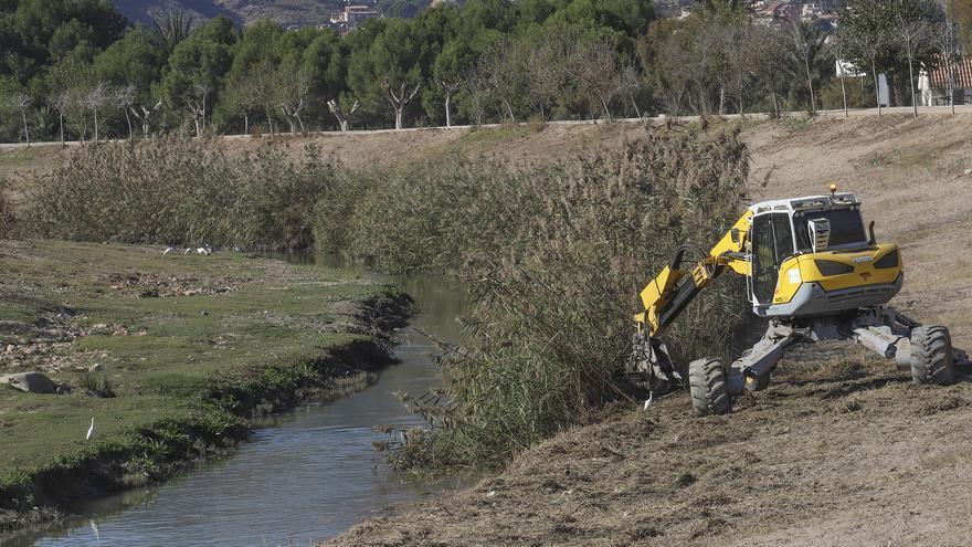 ¿Sirve para algo el desbroce radical de cañas en el río Segura?
